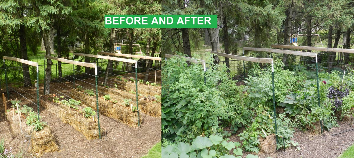 How to Get Started with Straw Bale Gardening - Empress of Dirt