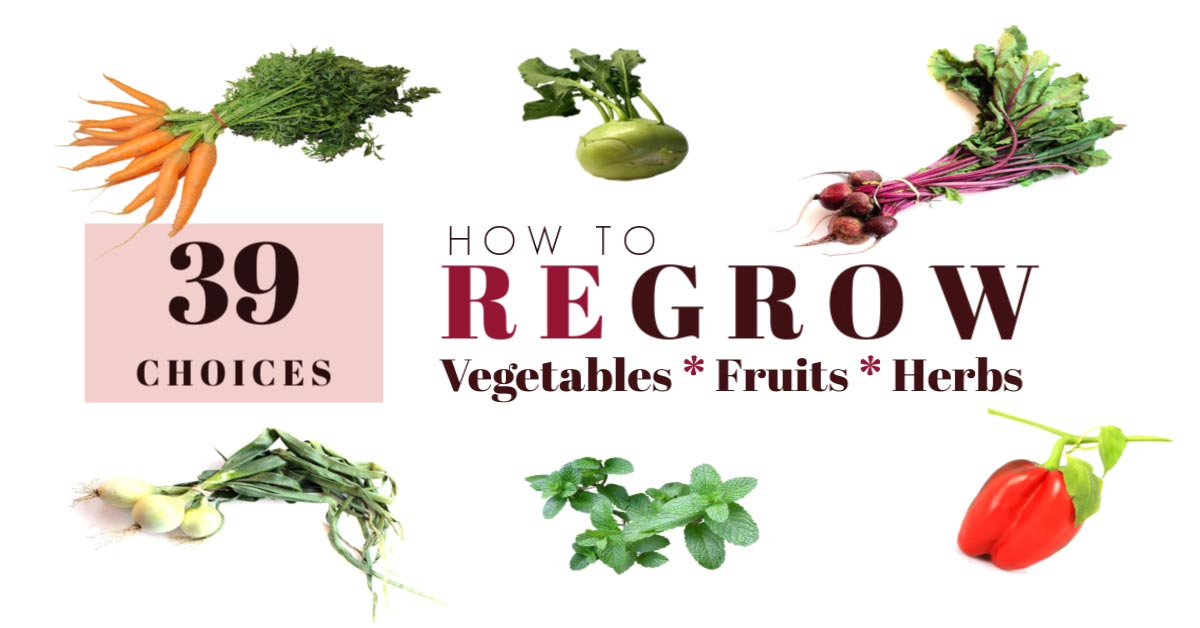 39 Vegetables, Fruits, and Herbs to Regrow from Scraps ... Growing Vegetables From Scraps
