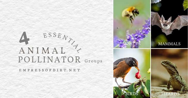 Pollinators including bee, bat, bird, and lizard.
