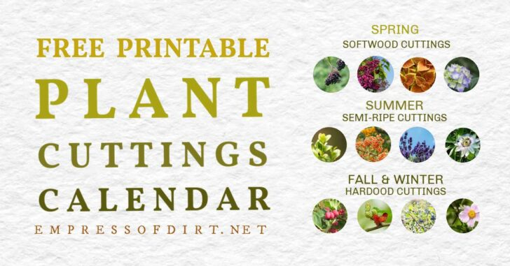 Seasoanl plant cuttings propagation calendar