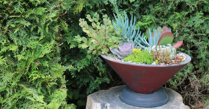 Assorted succulent plants in a container.