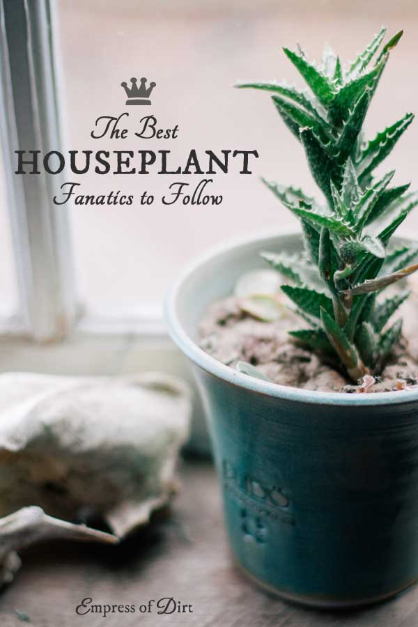 These 3 houseplant fanatics will inspire you to grow your own indoor jungle - big or small.