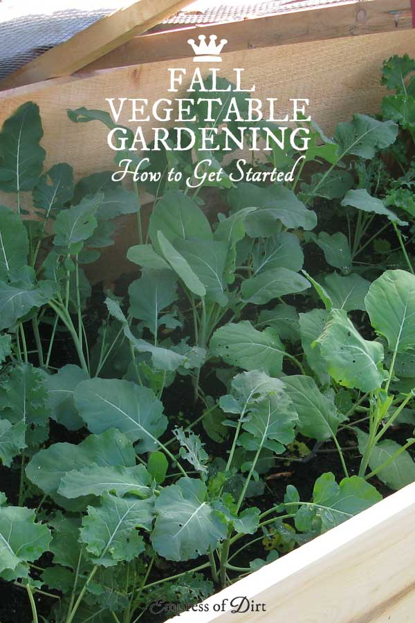 Tips for getting started with fall vegetable growing in a cold climate
