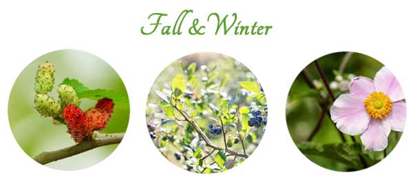 When To Take Plant Cuttings Seasonal Propagation