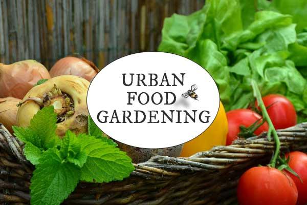 Feeding a Family with a Little City Garden