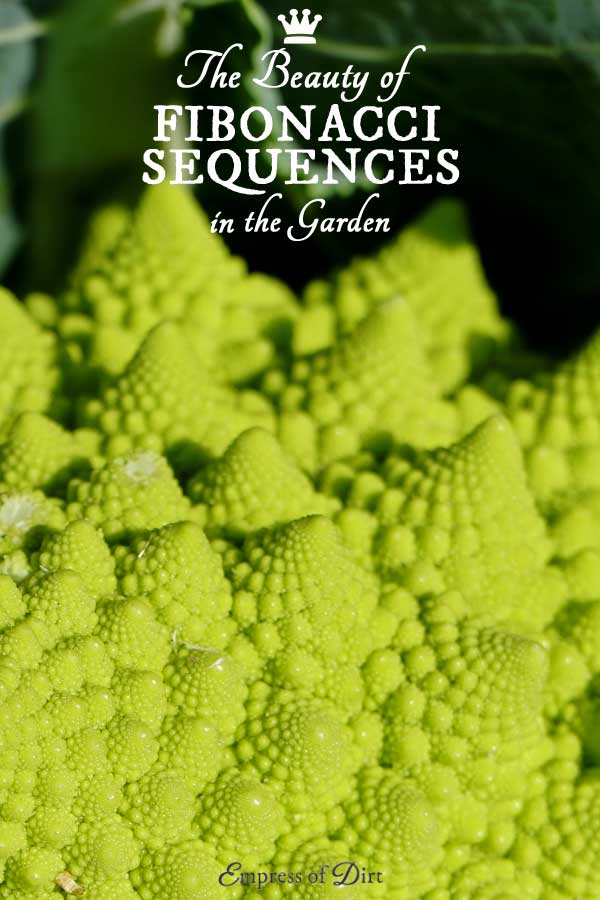 Watch this fabulous video demonstrating the wonders of the Fibonacci sequence. This is a pattern we see frequently in nature. The math that accompanies it is delightful.