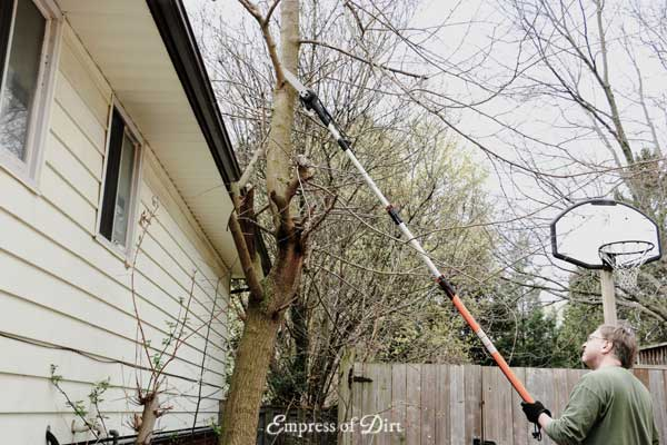 A pruning tool and saw with an extendable pole allows you to trim hard-to-reach branches.