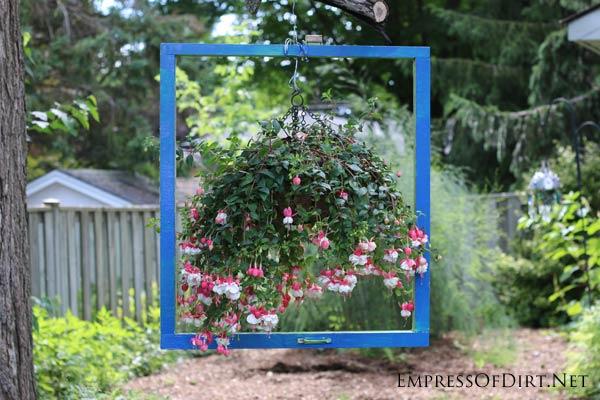 Fuchsia planter hanging in picture frame in garden.