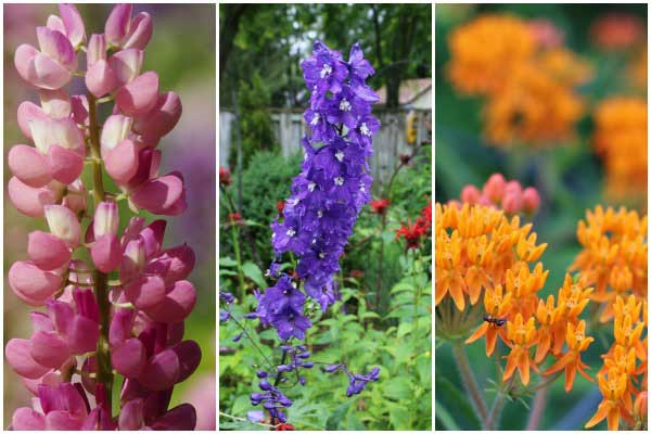 25 Flower Seeds to Sow in Fall including milkweed and delphiniums.