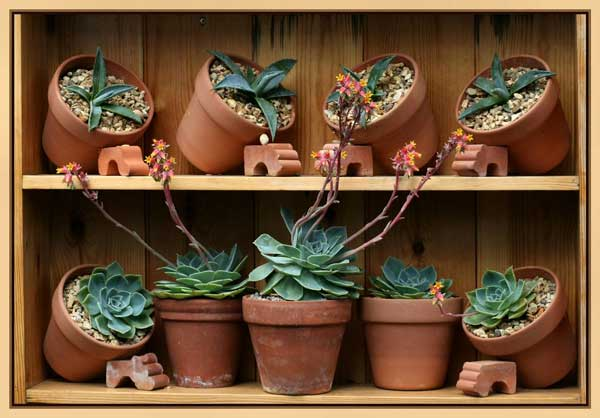 Clay pots with succlents in a framed shelf