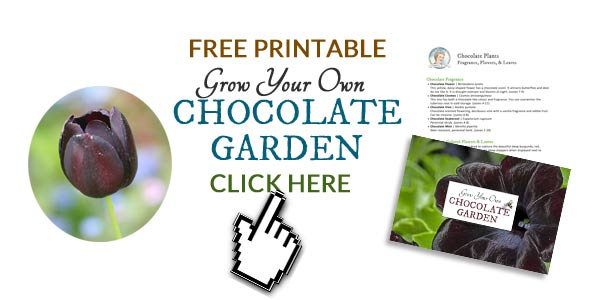 Grow your own chocolate garden