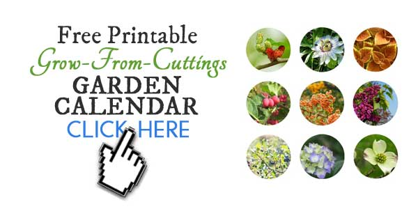 Free printable grow-from-cuttings garden calendar