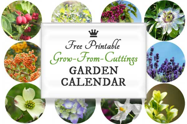 When to Take Plant Cuttings | Free Printable Garden Calendar