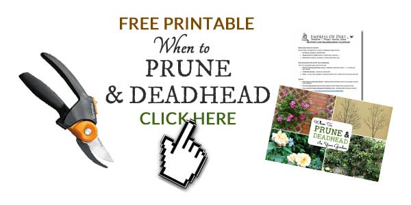 When to prune and deadhead in your garden