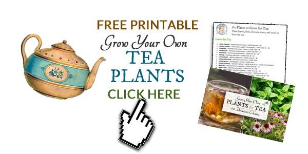 Grow Your Own Plants for Tea