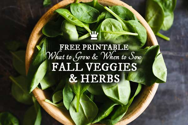 Veggies & Herbs to Grow in the Fall | Free Printable