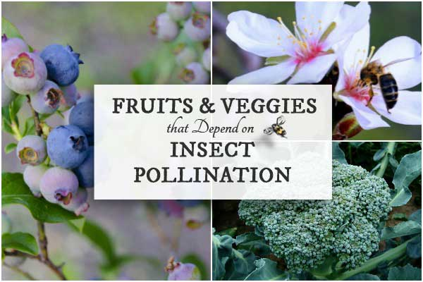 20 Fruits & Veggies Dependent on Insect Pollination