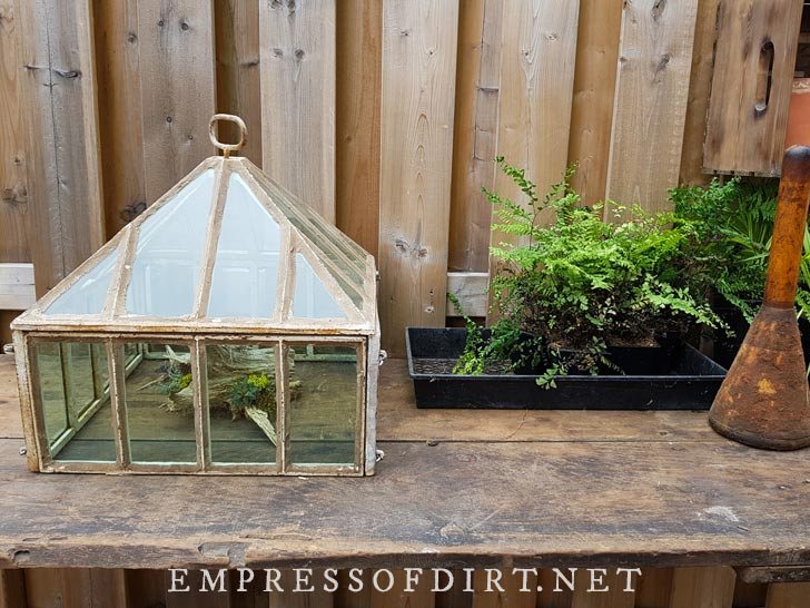 Mini terrarium and ferns on outdoor table.