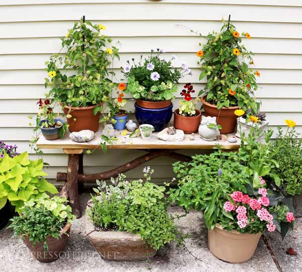 Bring your best flower pots together to create wow factor in the garden.