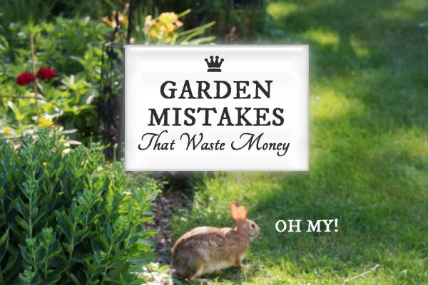 10 Garden Mistakes that Waste Money and what you can do to avoid them