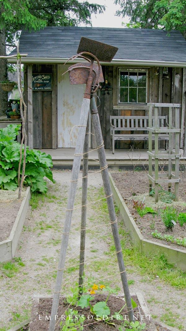 Old garden tool climbing vine support.