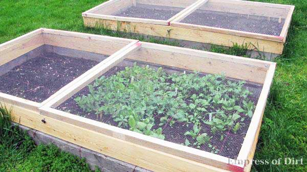 Protect your veggies with garden screens