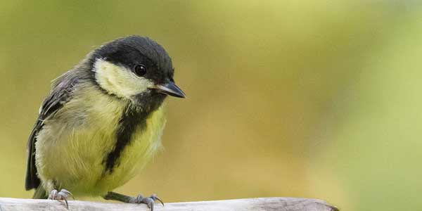 Backyard bird feeders may be altering the course of evolution