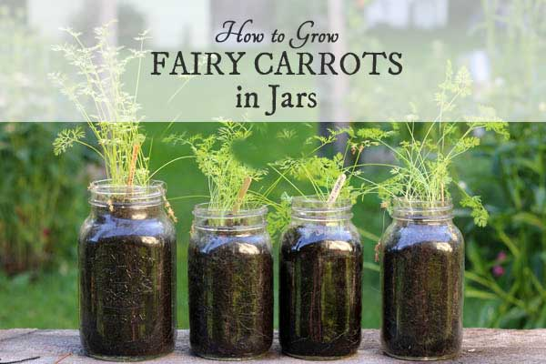 How to Grow Fairy Carrots in Mason Jars | This is an easy project to get kids and adults started with a simple, tidy, garden project that you can do in a small space, indoors or outdoors.
