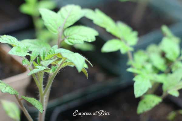 Before you sow, double-check the seed packet for any special growing instructions.
