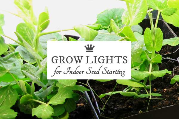 Grow lights, which are really just flourescent light fixtures (intended for workshops) hanging over shelves, are a great way to start seeds indoors at home.
