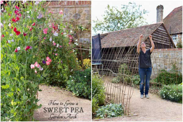 Grow a sweet pea garden arch - Gardening on a Shoestring