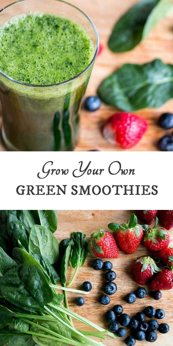 How to grow your own green smoothie garden