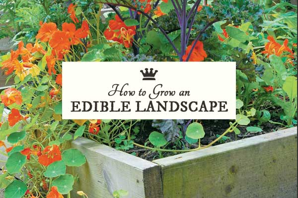 grow-an-edible-landscape-h1b