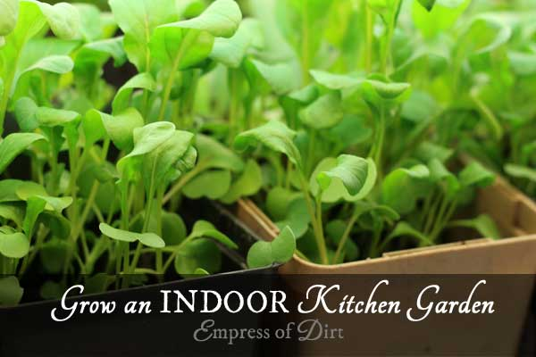 How to grow an indoor kitchen garden