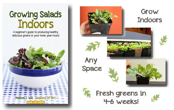 Grow salad greens indoors all year-round.
