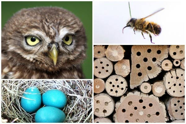 How to Choose Wildlife Houses for Birds  Bees Bats Owls