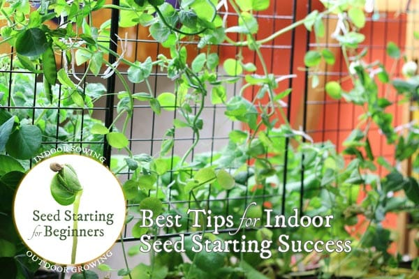 Best Tips for Indoor Seed Starting Success