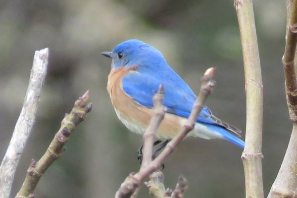 Make a bluebird nesting box with these free plans.