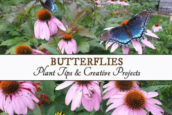 Butterfly Garden Tips and Creative Projects