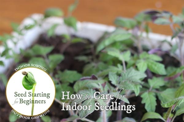 How to Care for Indoor Seedlings