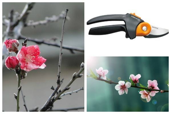 How to Choose the Right Pruning Tool for Your Garden