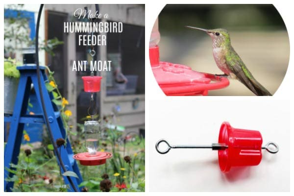 How to make a hummingbird feeder moat to keep ants away from the sugar water.
