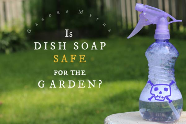 Is Dish Soap Safe for the Garden?