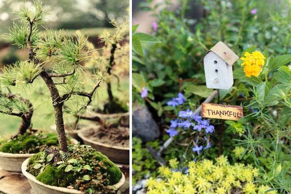 Bonsai tree and miniature birdhouse in fairy garden.
