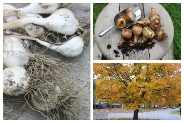 Fall is the time to protect your outdoor decor, but leave the garden mess. It's important for wildlife throughout the winter months.