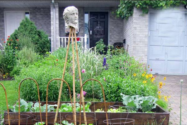 The challenge of growing vegetables in a front yard when neighbours may not like the idea.