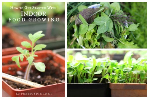 How to get started with indoor food growing.