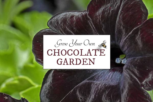 Grow a Chocolate-Themed Garden
