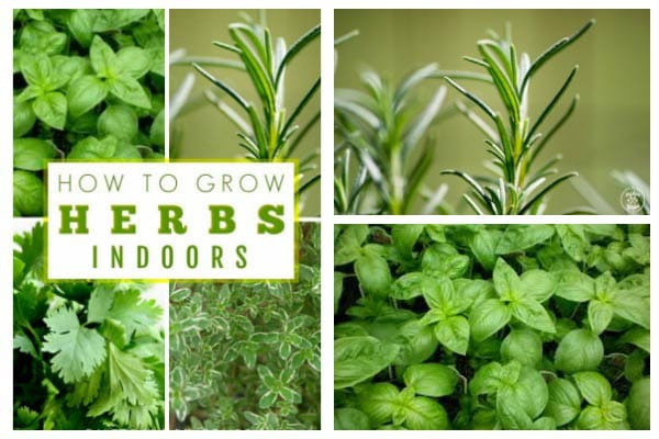 How to grow herbs indoors at home.