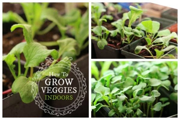 How to Grow Vegetables Indoors Year-Round